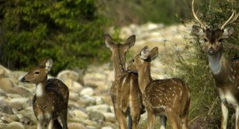 Hills and Wildlife of Uttarakhand – 6 Nights – 7 Days